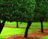 Gartenbepflanzung planen: Ideen und Tipps