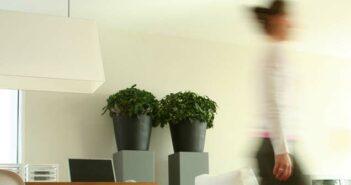 Pflanzen-Deko