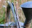Werkzeug für den Garten