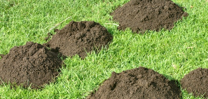 Maulwurf im Garten: 20 einfache Tipps zur Maulwurfbekämpfung