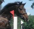 Gummimatte: Pferde im Offenstall und die Qual der richtigen Materialauswahl