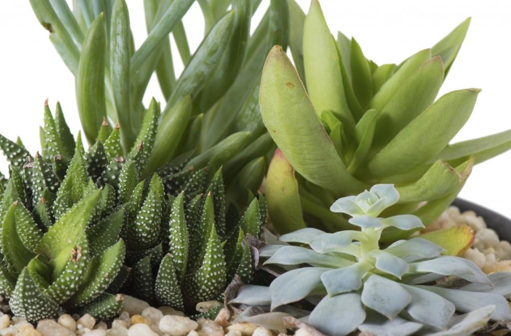 Wenn Sie Ihren Zimmerpflanzen regelmäßig viel Wasser spendieren, sorgen diese durch starke Verdunstung für eine feuchtere Luft. Nebenbei können Sie sich so an immergrünen Pflanzen erfreuen. Beides trägt zu einem Mehr an Wohlbefinden bei. (#2)