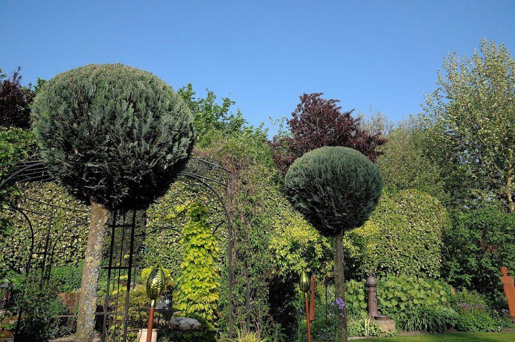 Kugelbäume setzen durch ihre besondere Krone ein schönes Highlight in jedem Garten und sind aufgrund ihres geringen Wachstums sehr beliebte Pflanzen. (#11)