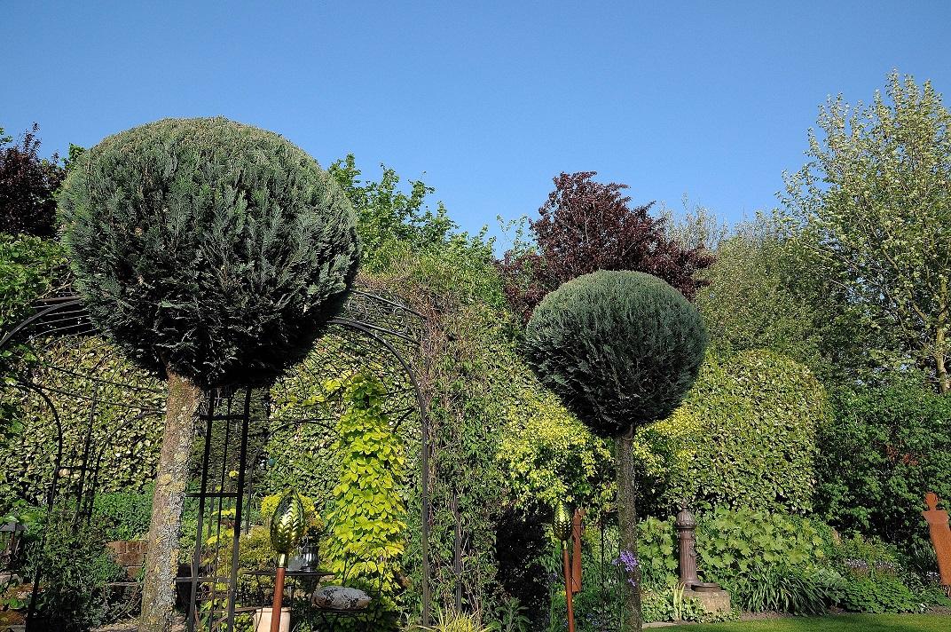 bäume einpflanzen jahreszeit