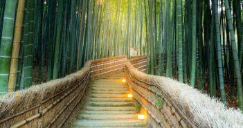Bambus als Kübelpflanze: Ideen & Tipps