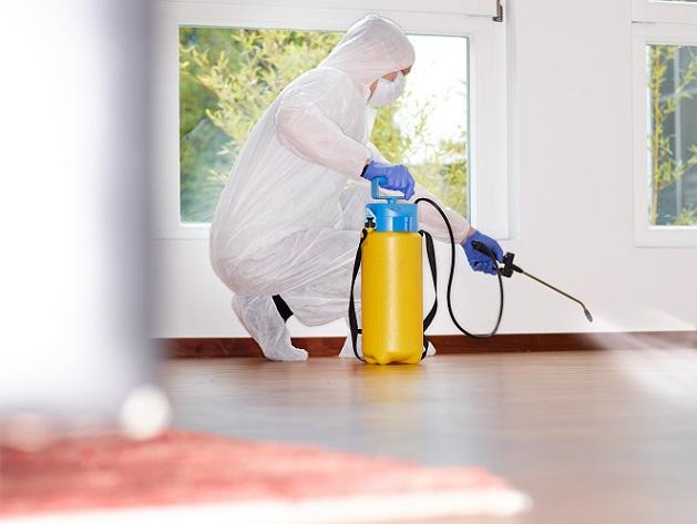 Die sicherste Methode, um die Parasiten aus dem Haus oder der Wohnung zu bekommen, ist ein Schädlingsbekämpfer. (#02)