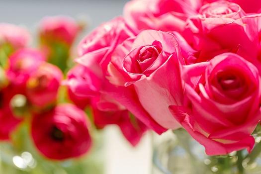 Wichtig ist, dass Rosen generell weniger Wasser brauchen, als oftmals angenommen wird. (#03)
