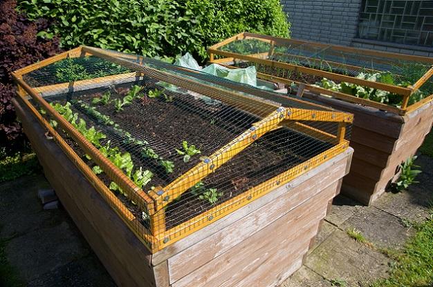 Ein weiterer Punkt spricht für die einfacher Pflege der Pflanzen. Gärtner haben die Möglichkeit, die Pflanzen aus einer geraden Haltung heraus zu betreuen. (#01)