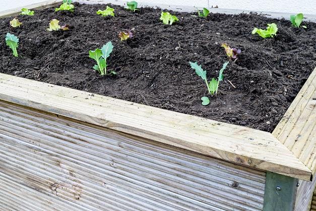 Nun kann also mit der Bepflanung begonnen werden und es stellt sich die Frage, welche Pflanzen sich gut machen. Gerade die erste Befüllung ist oft ganz besonders reich an Nährstoffen. (#02)