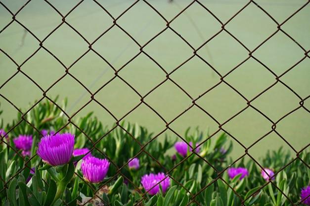Viele überlegen vor der Installation eines Zaunes, welches Modell wohl das passende für den eigenen Garten bzw. das eigene Grundstück ist.  (#01)
