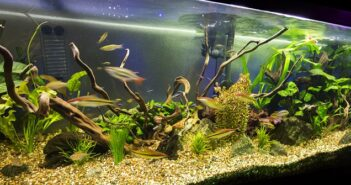 Aquaristik HH – was es für Heimwerker zu beachten gibt