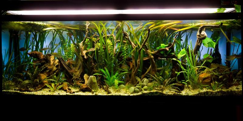 Neben den Unterschieden zwischen einem Süßwasser und einem Meerwasser Aquarium gibt es aber auch einige Gemeinsamkeiten. Bei beiden Arten muss man sich zunächst um die richtigen Pflanzen im Aquarium kümmern.(#01)