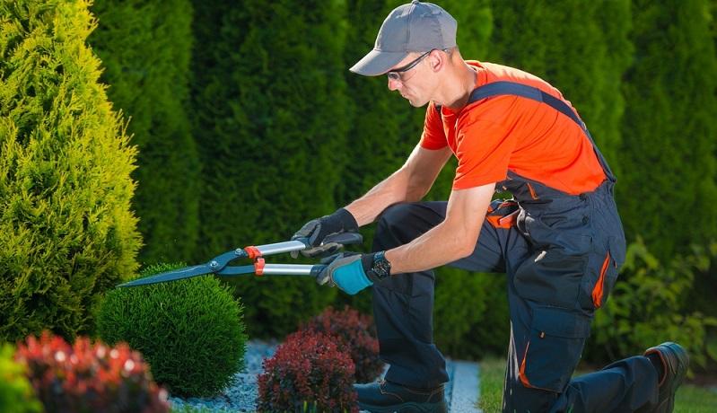 Scheren sind im Garten einfach unverzichtbar und sollten in verschiedenen Größen und Ausführungen gekauft werden. (#05)