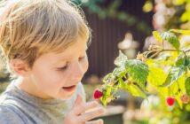 Den Garten zum Kinderparadies machen: 8 unschlagbare Tipps