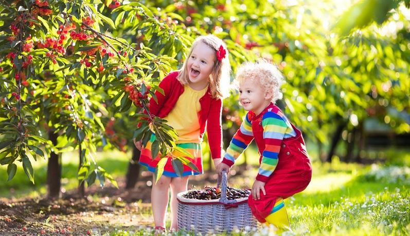 Selbstgepflückte Beeren schmecken gleich dreimal so gut. (#02)