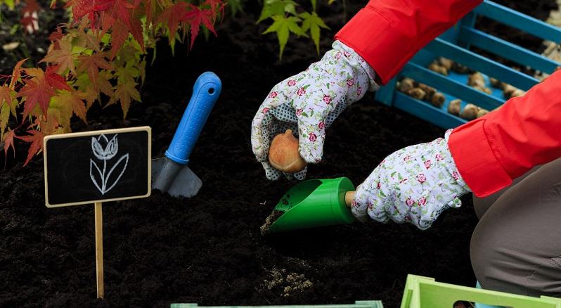 Da der Garten auch im nächsten Frühjahr wieder in voller Pracht blühen soll, müssen Sie bereits vor dem ersten Frost Frühblüher setzen. (#01)