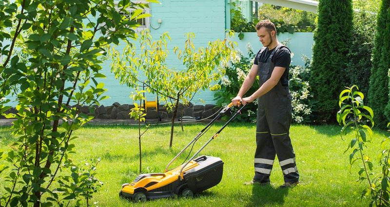Wenn Sie einen Rasen richtig pflegen wollen, sollten Sie auch wissen, welche Ansprüche das Gras an seine Umwelt stellt. (#03)