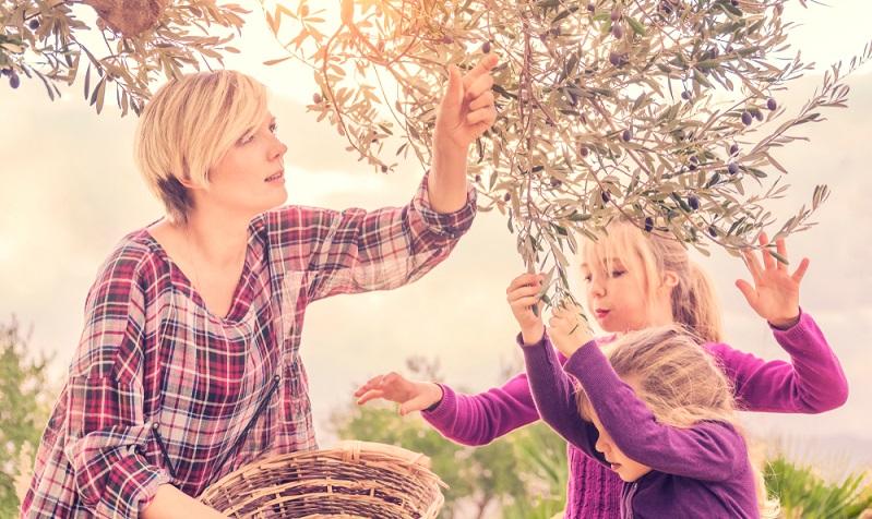 Angesichts der ständigen wechselnden Winter (mal lange trocken und sehr kalt, mal feucht mit Temperaturen im Plusbereich) ist es am einfachsten, Olivenbäume im Kübel zu kultivieren.