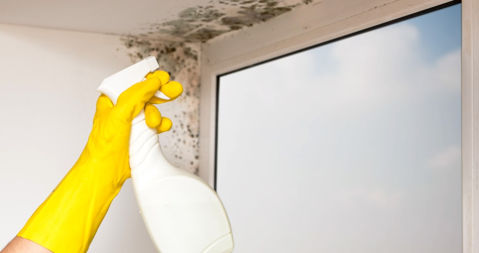 Beim Entfernen von Schimmel im Schafzimmer greift man gerne auf Schimmelspray zurück. Man sollte den Schimmel jedoch dauerhaft vom Profi entfernen lassen. (#6)
