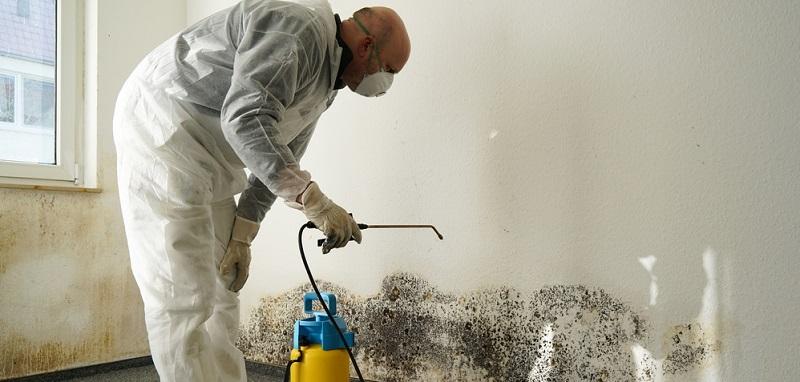 Wenn sich Schimmel an den Wänden oder in anderen Bereichen zeigt, wird empfohlen, diesen schnell zu bekämpfen.