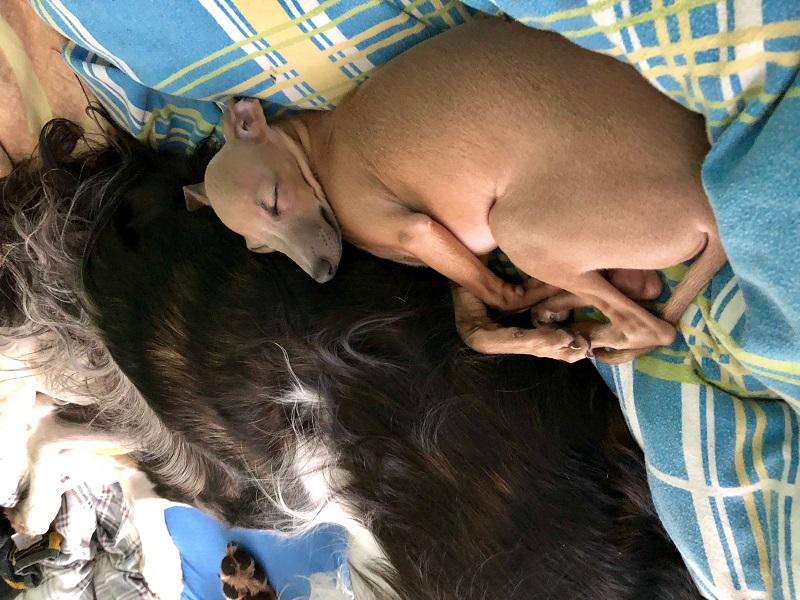 Selbstverständlich muss ein Hund, genau wie ein Mensch, nicht täglich die perfekte Mischung aus allen Vitalstoffen im Napf haben.