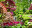12 rote Blumen für Garten, Balkon & Kübel