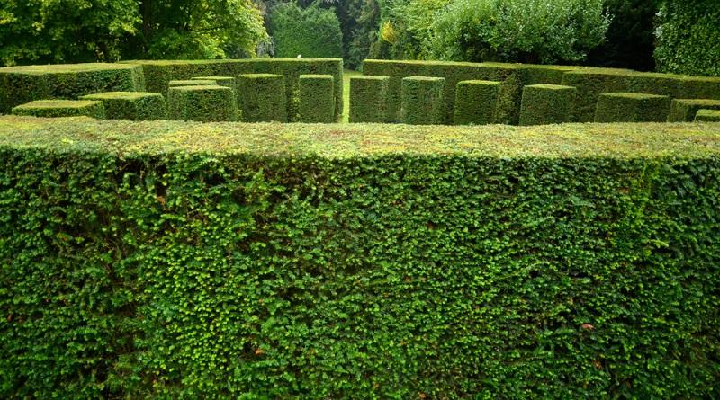 Ein Eiben-Labyrinth: wunderbare Formen lassen sich aus der Eibe schneiden.