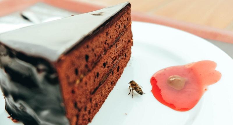 Bienen (auch Erdbienen) will man nicht auf seinem Kuchen.