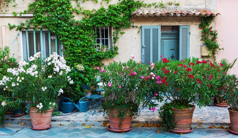 Oleander ist sehr wuchsfreudig, daher muss man junge Pflanzen jährlich umtopfen. Die beste Zeit dafür ist im Frühjahr nach dem Überwintern.