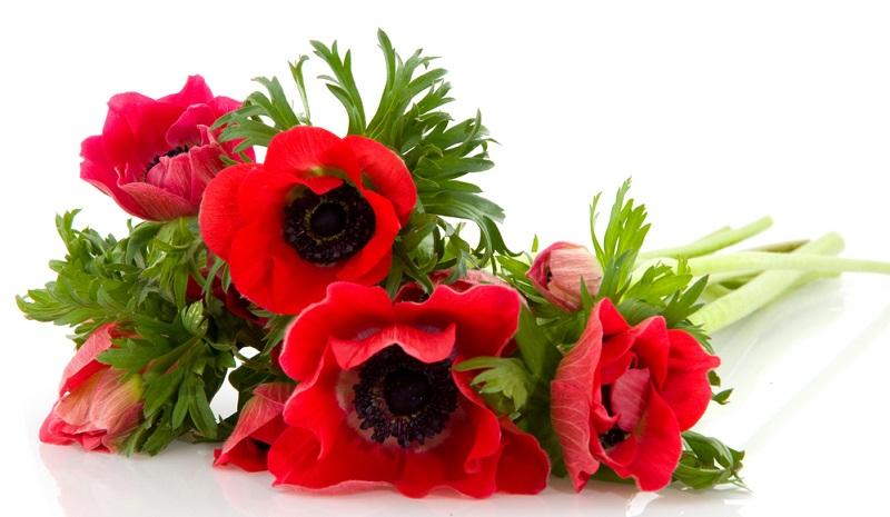Die zarte Blume hat es der Geschichte um die Göttin Flora und ihren Gatten Zephyr zu verdenken, dass sie symbolisch für Verlassenheit, Vergänglichkeit, Erwartung, Enttäuschung und Hoffnung steht.