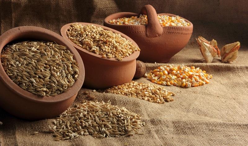 Getreidekörner sind bevorzugte Nahrung für die Larven der Lebensmittelmotte.