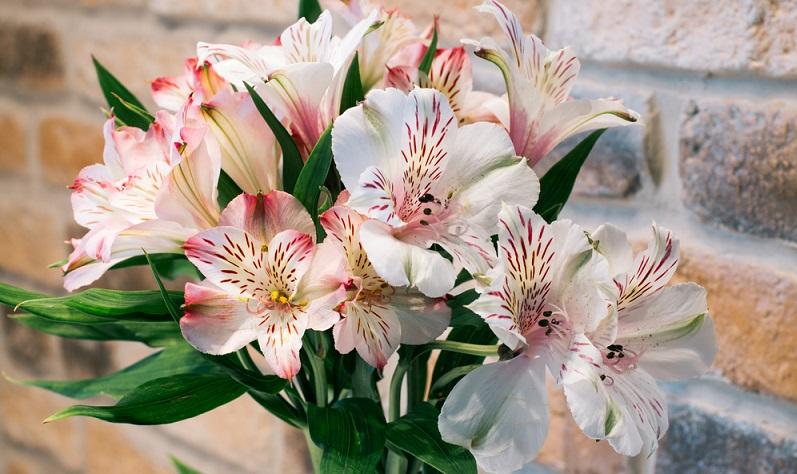 Die majestätischen Lilien gelten als Königinnen der Blumen und haben einen glatten, meist grünen Stängel.
