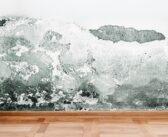 Beseitigung von Feuchtigkeit in der Wohnung