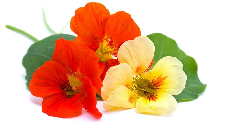Südamerika ist sonnig und warm. Deshalb hat die Heilpflanze auch hierzulande gerne ein sonniges Plätzchen.