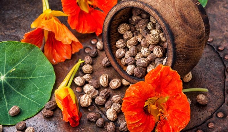 Folgende Schritte erleichtern die Keimung der runden Samen: Die Samen einige Stunden in einem Glas oder einer Schale mit Wasser quellen lassen.