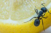 Ameise im Haus und Garten bekämpfen
