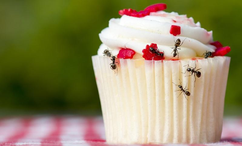 Wenn im Sommer die Fenster und Türen geöffnet sind, findet die Ameise bei ihrer ständigen Suche nach Nahrung leicht den Weg in die Wohnung.