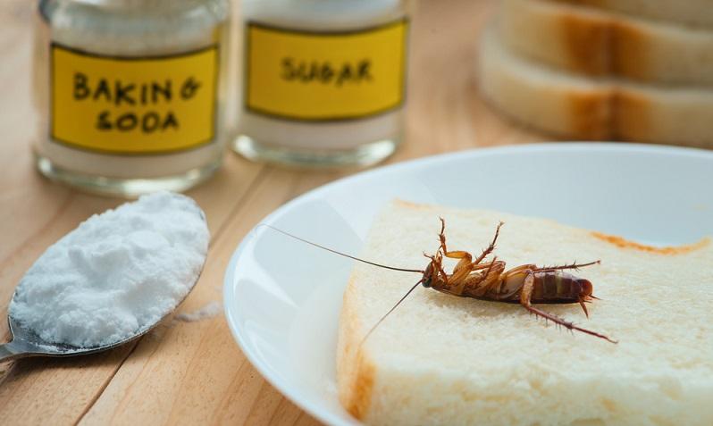 Backpulver ist das bekannteste, allerdings mittlerweile auch sehr umstrittene, Mittel zur Bekämpfung von Ameisen.
