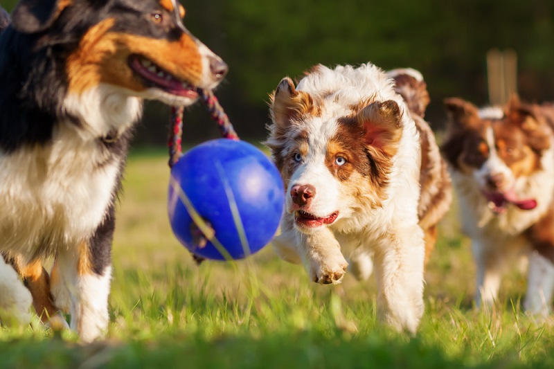 Hundegebell: Gelegentliches bellen am Tag muss man hinnehmen. Bellt oder jault ein Hund nachts über einen längeren Zeitraum hinweg, muss der Halter das unterbinden. (#03)