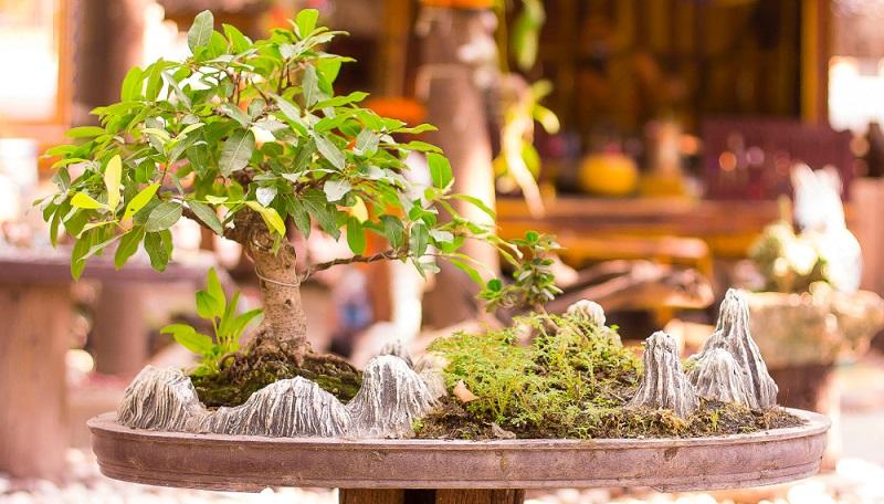 Durch den Wurzelschnitt passt der Bonsai wieder in die vorhandene Schale.