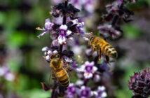 Bauerngarten Blumen: Tipps & Tricks zur Pflanzung