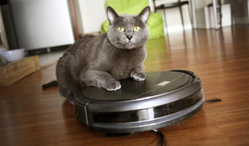 Trotz der mäßigen Ergebnisse der Saugroboter im Test, scheinen Haustiere Gefallen an einigen Geräten gefunden zu haben. (Foto: Shutterstock - Photo Spirit)