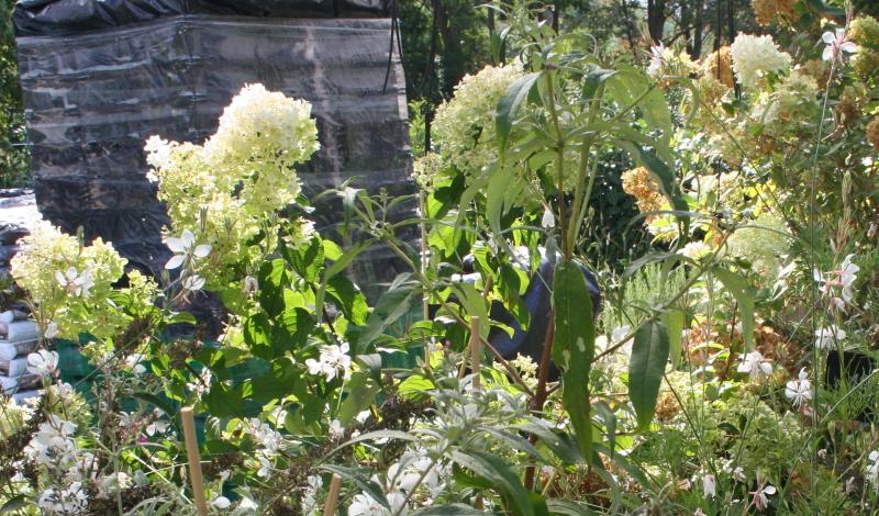 Die Spornblume als tolle Ergänzung im Staudenbeet