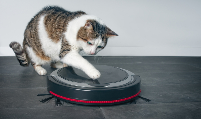 Test Saugroboter 2020: Auch die Haustiere haben ein Wörtchen mitzureden. (Foto: Shutterstock - Lightspruch)