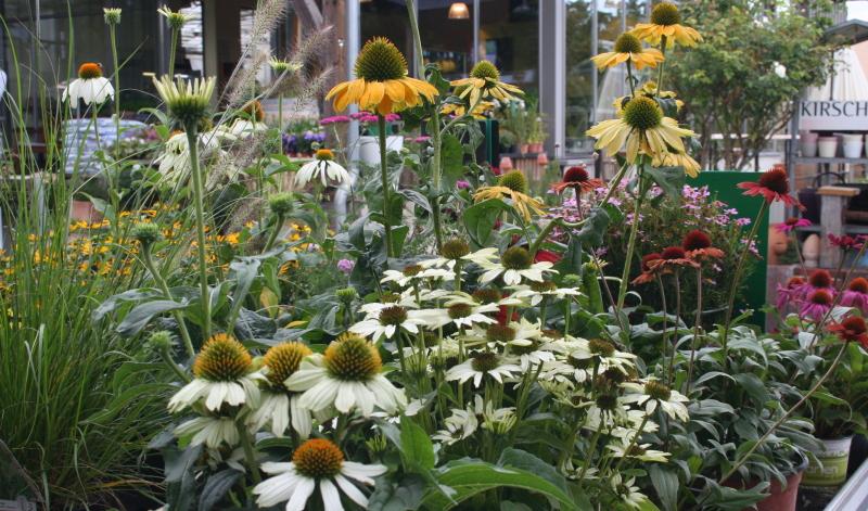 Unser Gartenexperte zeigt Ihnen Ideen auf, welche Pflanzen für einen Natur- und Bauerngarten geeignet sind und wie Sie ihn gestalten können.