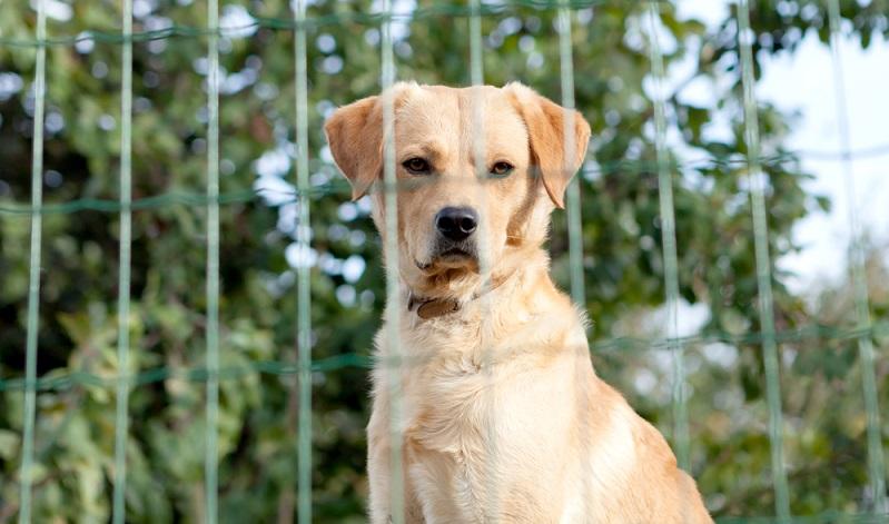 Der Hundezaun sollte sich an der Größe und Agilität des Hundes orientieren. (Foto: Shutterstock-Gelpi _)