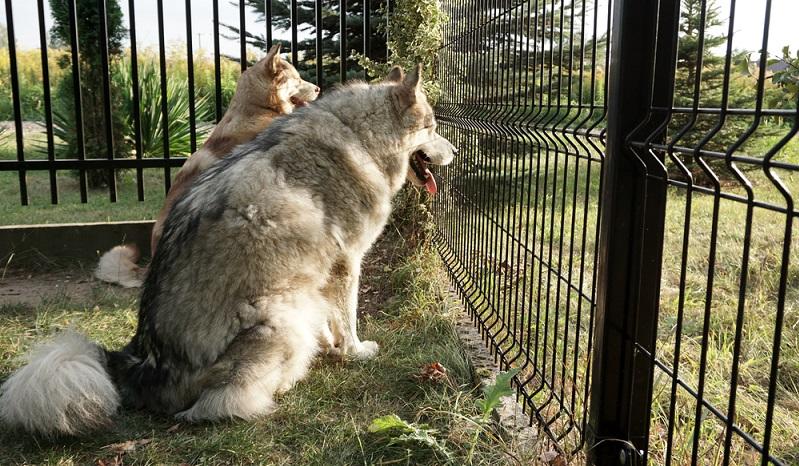 Ein Grundstücksbesitzer ist nicht dazu verpflichtet, einen Zaun zu bauen. ( Foto: Shutterstock-Alicja Graczyk )