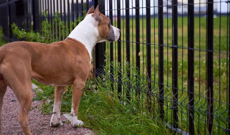 Der Zaun für Hunde muss sicherstellen, dass das Tier nicht ausbrechen kann. ( Foto: Shutterstock-EverGrump )