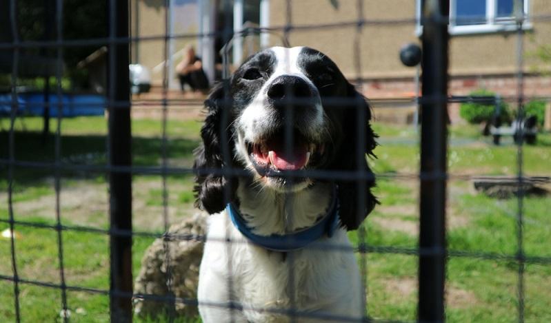 Der Zaun sollte so hoch sein, dass stehende Hunde nicht mit dem Kopf über selbigen ragen. ( Foto: Shutterstock-_ Asmethurst101 )