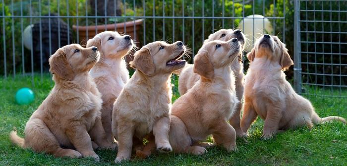 Zaun für Hunde Pflicht? So urteilen Richter ( Foto: Shutterstock-demanescale)